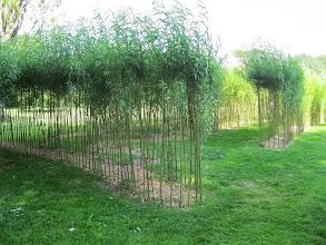 Photo: Labyrint af piletræer - sjov at lege fangeleg i