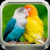 Kicau Burung Lovebird