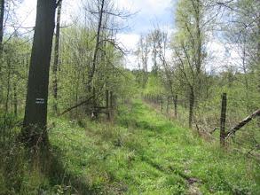 Photo: Niebieski szlak uciekł opłotkami,  zielony zniknął bez ostrzeżenia, a my poszliśmy w przeciwnym kierunku nieoznakowaną szlakiem leśną ścieżką. Teraz nadszedł czas na naukę poruszania się po lesie przy pomocy mapy oddziałów leśnych i kamieni oddziałowych.