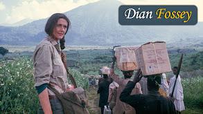 Dian Fossey thumbnail