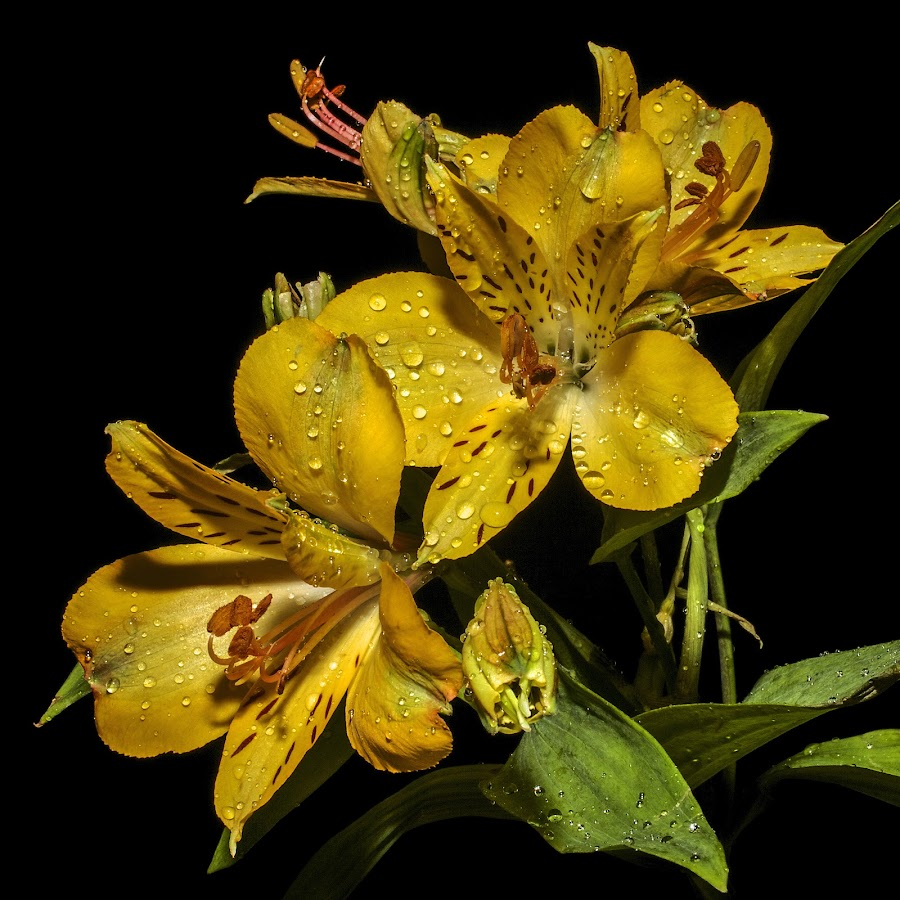 by Cezar Pegoraro - Nature Up Close Flowers - 2011-2013