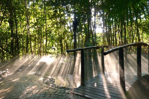 Passeggiando  . . . di Hanami