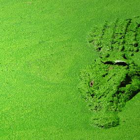 Camouflage by Muhammad Buchari - Animals Reptiles