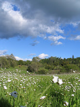 Photo: Yoga Farm, Grass Valley, CA - field in the spring