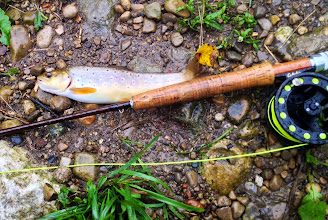 Photo: Hey guys, My name's Jonny Fry and i was in the shop a few days ago getting some tips and flies, and got out and beat the storms today and caught my first Brown on the Mad, which doubled as my first wild trout! While sitting, changing flies, i looked up and happened to see a 12ish inch brown hit the surface and jump. I thought it seemed strange given it was raining, but after swinging a nymph y'all recommended me for a little bit, i got one! A 9'' fish never felt and looked so good! Thanks for all the help, you guys rock!