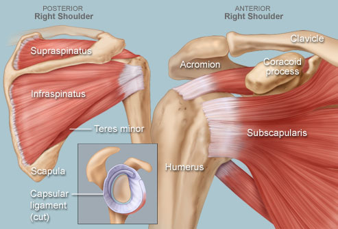 rotator cuff related shoulder pain chan chiropractic and  : shoulder pain diagram - findchart.co