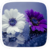 Purple Flowers Theme