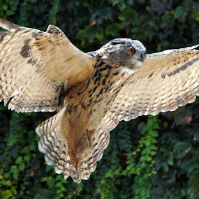 It was Thiiiis Big. by David Degruchy-Jones - Animals Birds