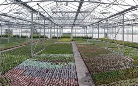 Cafe plans submitted by horticultural business