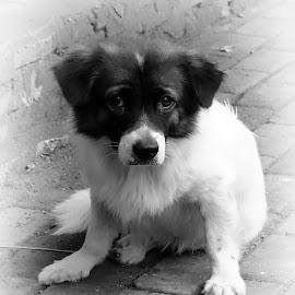 by J W - Black & White Animals