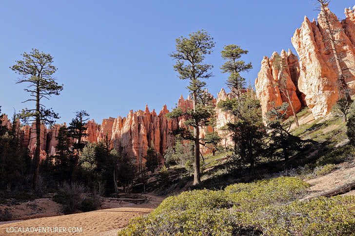 Under the Rim Trail Bryce Canyon Things to Do