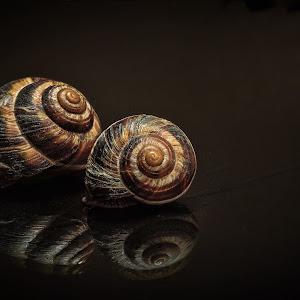 snails on the glass (1 of 1)sc1.jpg