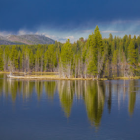 Golden hour light by Aditi Dinakar - Landscapes Forests ( water, national park, yellowstone, reflection, nature, wyoming, lake, landscape, usa )