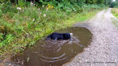 Photo: Is dit een hond of een waterrat ?