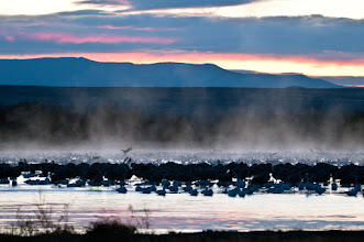 Photo: Pond filled with sandhill cranes and snow geese a half hour before sunrise