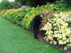 Photo: Barbara stops to smell the azelias in the garden of Blickling Hall.
