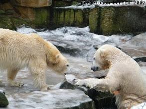 Photo: Vielleicht kommt Gianna wieder zu Knut ins Wasser ;-)