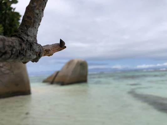 Alberi sulla spiaggia di fnc