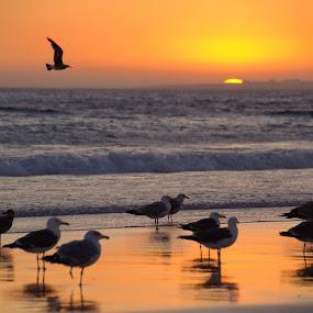 Last light by Eugénio Buchinho - Landscapes Sunsets & Sunrises