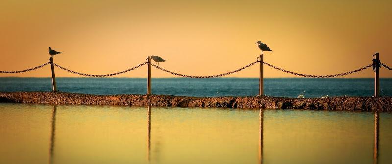 Photo: Birds on a chain