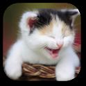 Funny Cat Live Wallpaper icon