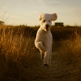 Action Shot of Big Puppy on Beach by Charlie Abrams - Animals - Dogs Puppies