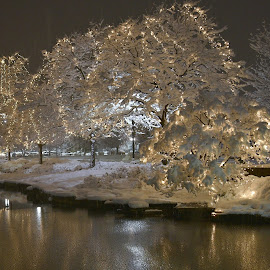 by Diana Margan - City,  Street & Park  City Parks