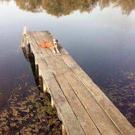 Dog on the lake by Sibi Sibi - Novices Only Pets ( fall, autumn, dock, dog, lake, pet )