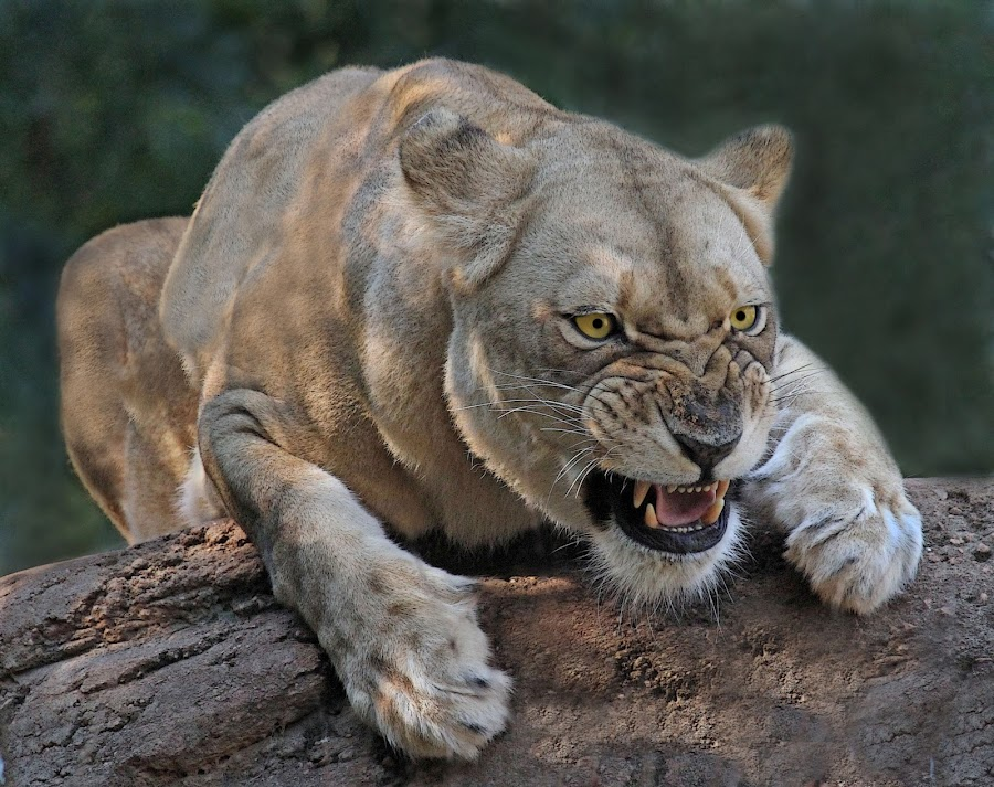 Gotcha by Robert Glick - Animals Other Mammals