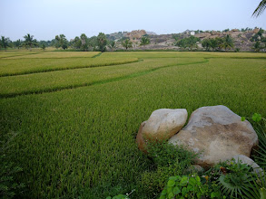 Photo: Rice paddies and granite boulders.