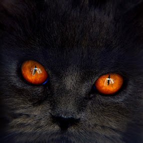 by Azmi Han - Animals - Cats Portraits