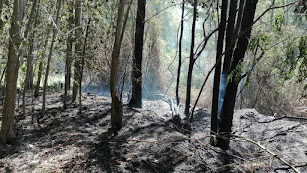 Zona afectada de un incendio forestal de 2016 en Fondón.