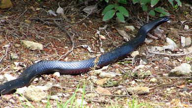 Photo: Year 2 Day 160 - Here's Our Snake