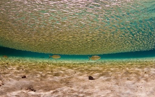 bonaire-teeming-fish.jpg - The waters of Bonaire, perfect for snorkelers and scuba divers, teem with tropical fish.