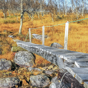 Autumn bridge by Benny Høynes - Buildings & Architecture Bridges & Suspended Structures ( wooden, leafs, autumn, fall, leaf, bridge, norway )