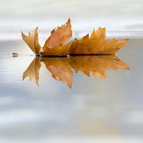 Destiny by Adrian Urbanek - Nature Up Close Leaves & Grasses