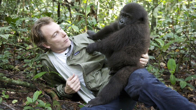 Watch Gorilla School live