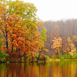 The beauty of Fall. by Peter DiMarco - Nature Up Close Trees & Bushes ( fall colors, nature, nature up close, trees, water )