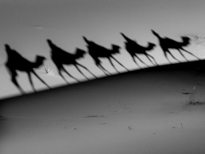 Cinquina d'ombre di flaviogallinaro