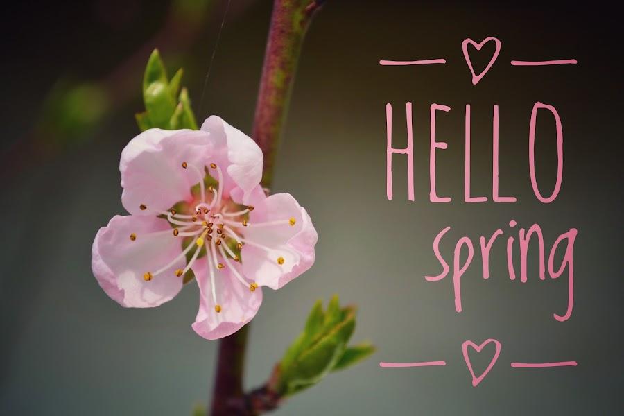 HELLO spring by Dunja Milosic Odobasic - Typography Quotes & Sentences