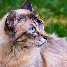 CAt by Karoner Gaming - Animals - Cats Portraits (  )
