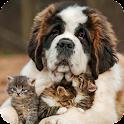 Saint Bernard Dog Pack 3 Lwp icon