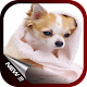 Cute Dog Wallpaper for PC-Windows 7,8,10 and Mac