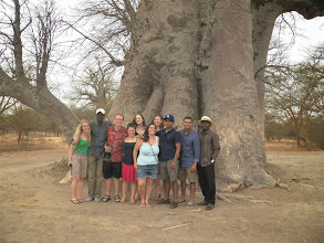 Photo: The whole group under a Baobab tree