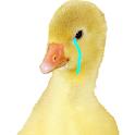 Super Cutre Bird icon