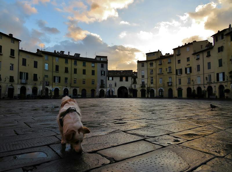 Fiuto in piazza  di Giorgio Lucca