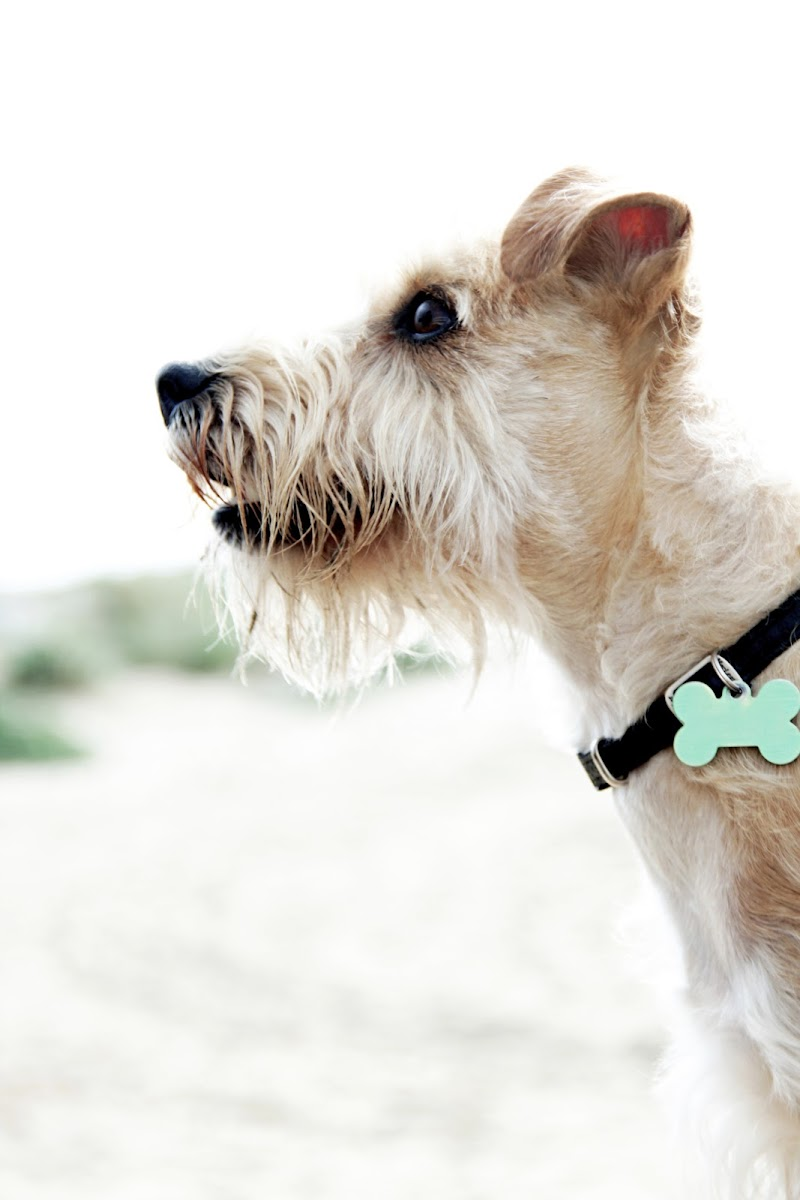 Dog profile di PhotoBySaraPesucci