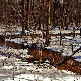 Patuxent Winter Forest Scene 2018 by Matthew Beziat - Landscapes Forests ( forests, patuxent research refuge north tract, winter, snow, anne arundel county, trees, maryland, forest, maryland forests, patuxent research refuge,  )