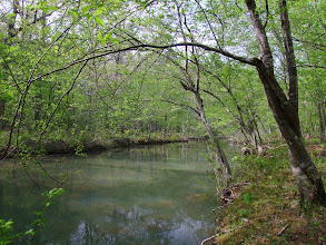 Photo: Little Cedar Creek in Flatside Wilderness Area