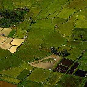 Harau Field Pattern by Taufiqurrahman Setiawan - Landscapes Prairies, Meadows & Fields